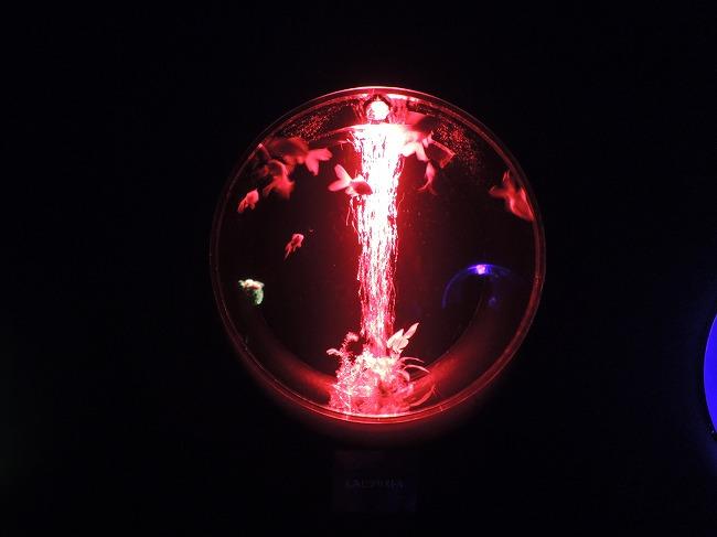 アートアクアリウム2015-04