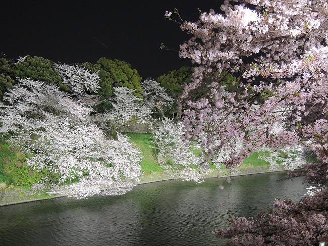 2016千鳥が淵桜ライトアップ1