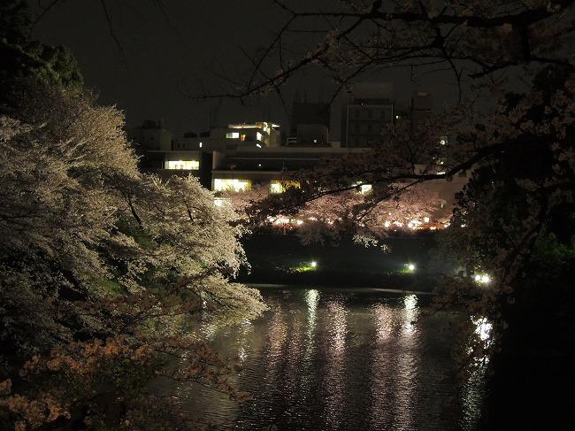 2016千鳥が淵桜ライトアップ2