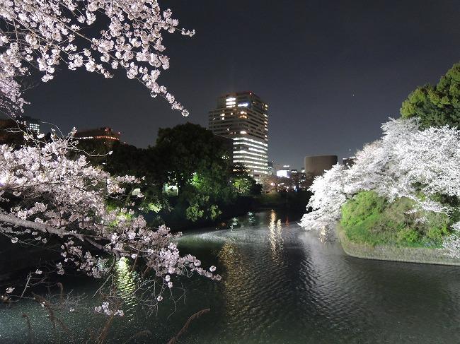 2016千鳥が淵桜ライトアップ4